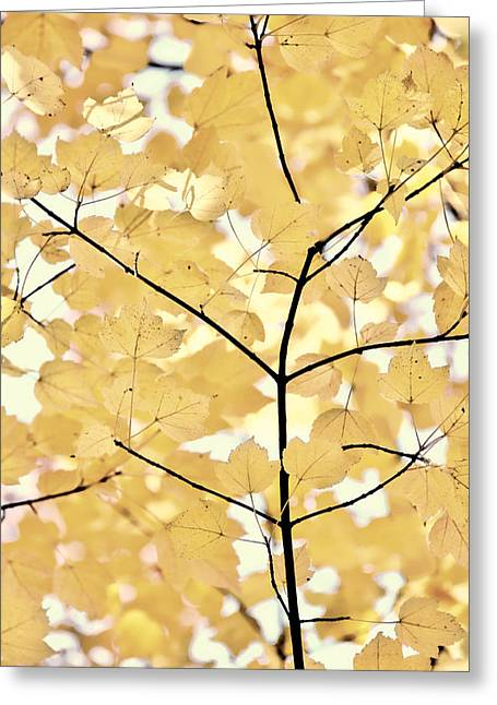 Golden Brown Greeting Cards - Yellow Brown Leaves Melody Greeting Card by Jennie Marie Schell