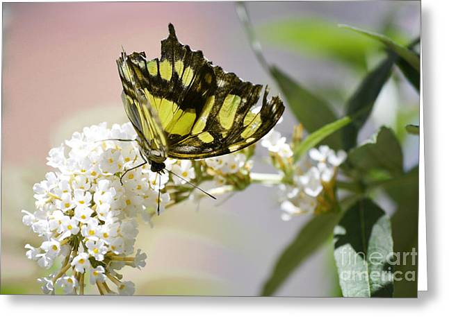 Orange And Brown Wings Greeting Cards - Yellow Butterfly Beauty Greeting Card by Andrea Hazel Ihlefeld