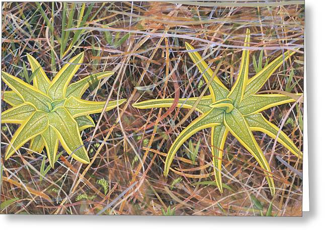 Green Leafs Drawings Greeting Cards - Yellow Butterwort in Habitat Greeting Card by Scott Bennett