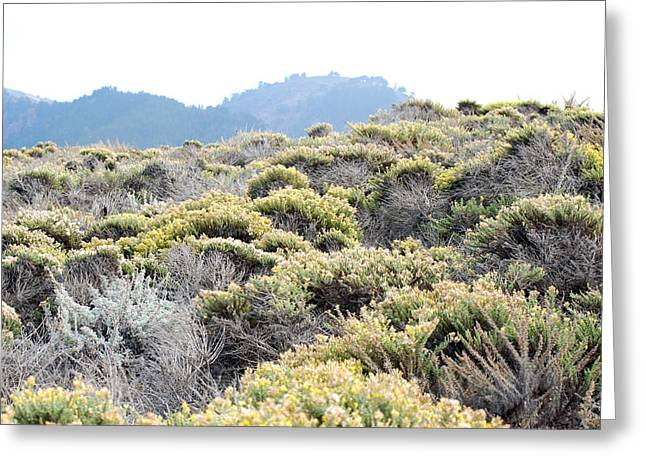 Point Lobos Greeting Cards - Yellow Coastal Scrub Greeting Card by Harvey Barrison