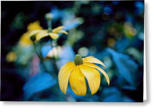 Poetic Greeting Cards - Yellow cone flower on Blue background Greeting Card by Marcio Faustino