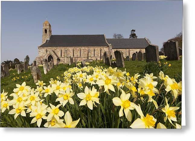 Headstones Greeting Cards - Yellow Daffodils In A Cemetery Beside A Greeting Card by John Short