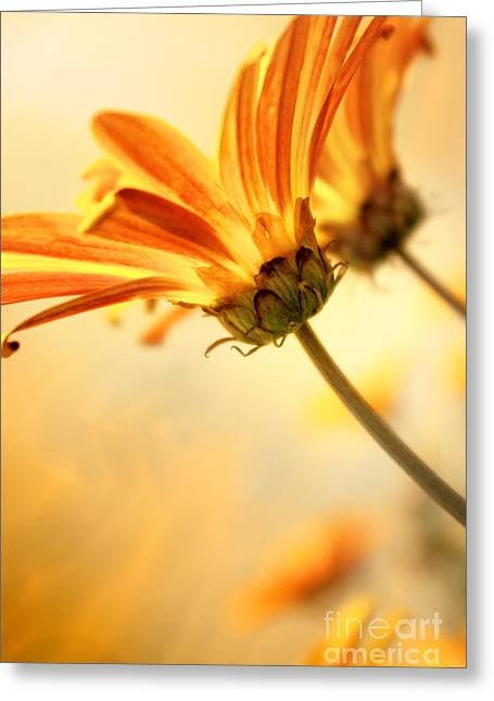 Germinate Greeting Cards - Yellow Daisies Greeting Card by Carlos Caetano