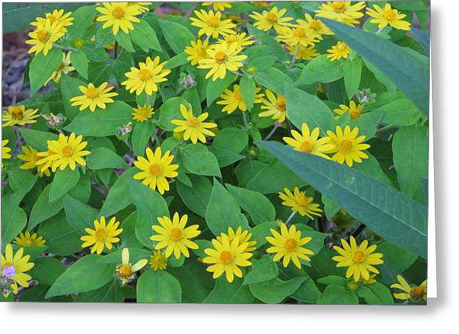 Sunflower Patch Greeting Cards - Yellow Daisies Greeting Card by RobLew Photography