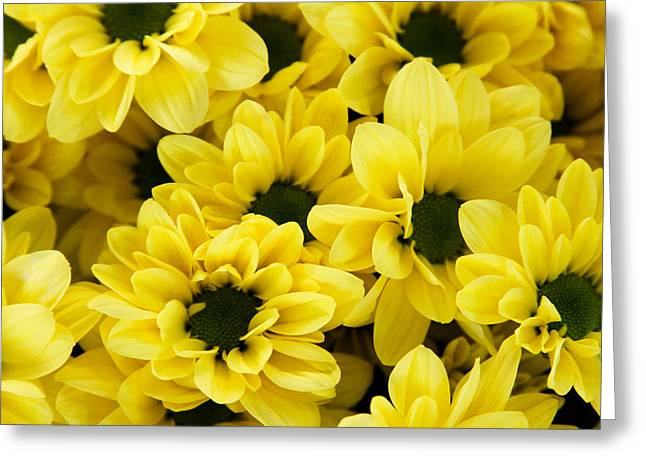 Daiseys Greeting Cards - Yellow Daisy Garden Greeting Card by Tony Grider