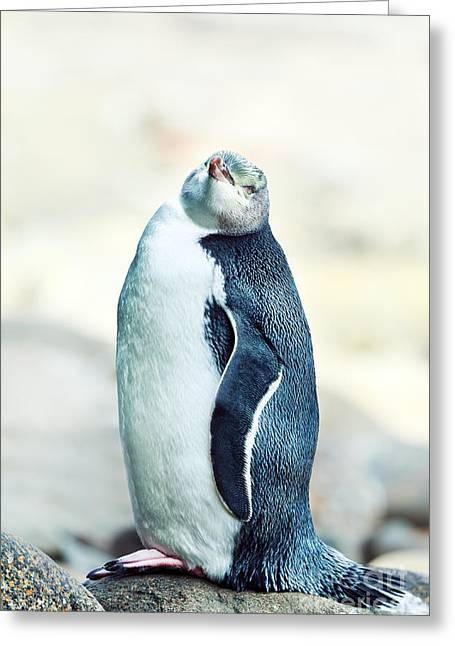 """""""yellow Eyes"""" Greeting Cards - Yellow-eyed Penguin Greeting Card by MotHaiBaPhoto Prints"""