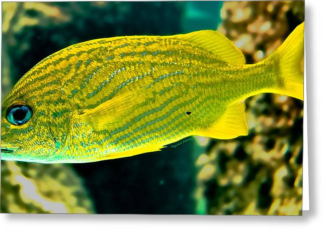 Aquarium Fish Greeting Cards - Yellow Fellow Greeting Card by DigiArt Diaries by Vicky B Fuller