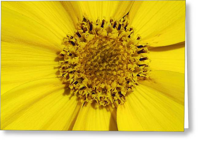 Flowered Greeting Cards - Yellow flower detail Greeting Card by Matthias Hauser