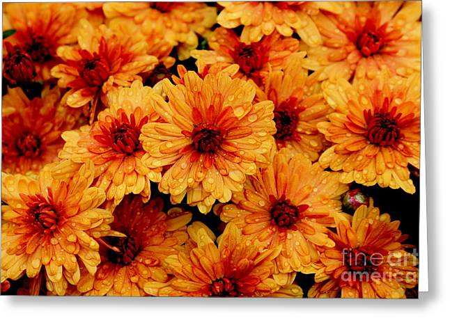 Best Sellers -  - Becky Greeting Cards - Yellow Glow Greeting Card by Becky Neu