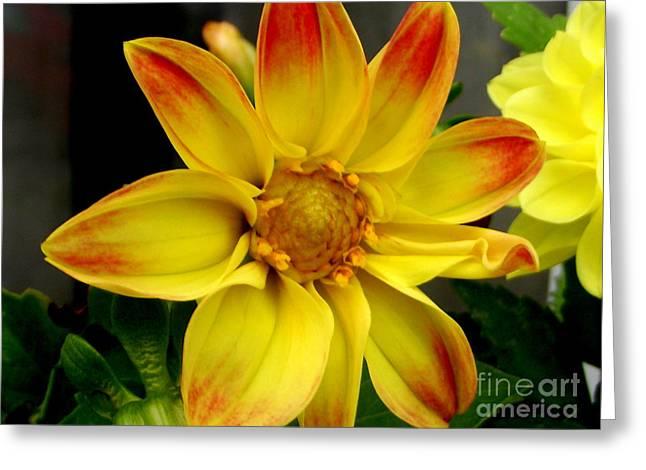 Daliha Greeting Cards - Yellow Glow Greeting Card by Lorainek Photographs