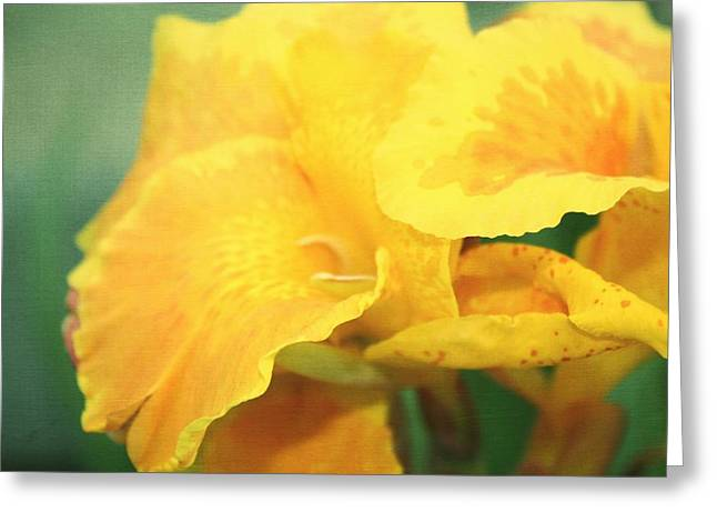 Oregon Flowers Greeting Cards - Yellow Iris Greeting Card by Cathie Tyler