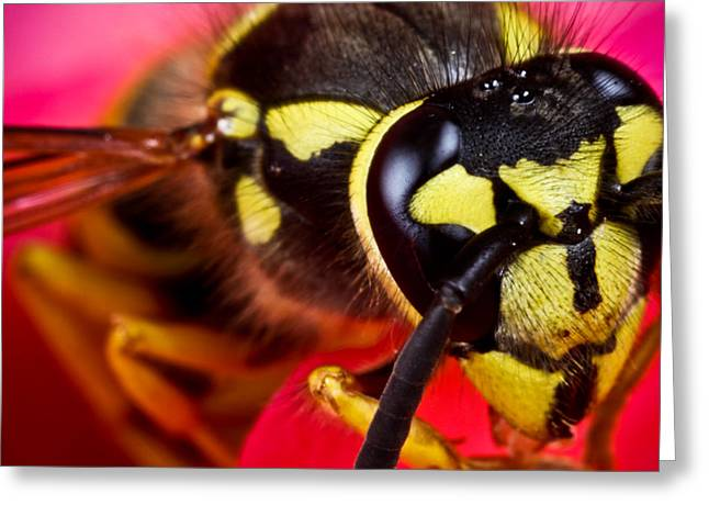 Macro Finalized Photographs Greeting Cards - Yellow Jacket Greeting Card by Ryan Kelly