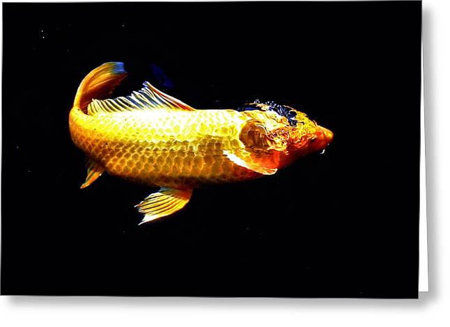 Oranda Greeting Cards - Yellow Koi Rises Greeting Card by Don Mann