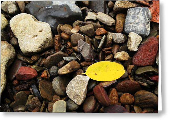Richland Creek Greeting Cards - Yellow Leaf Greeting Card by Matthew Parks