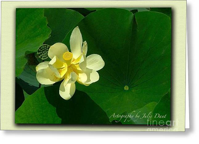 Julie Dant Artography Photographs Greeting Cards - Yellow Lotus Blossom in Mississippi  Greeting Card by Julie Dant