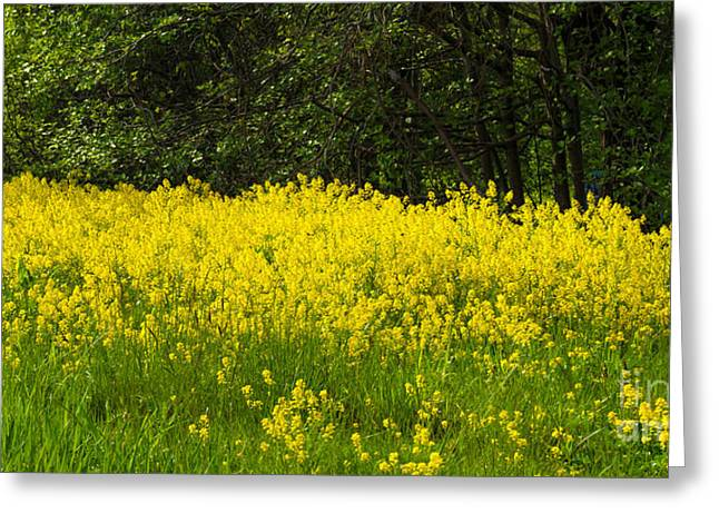 Yellow Meadow Flowers Greeting Card by Lutz Baar