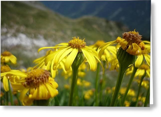 Yellow Mountain Flowers Greeting Card by Martin Marinov