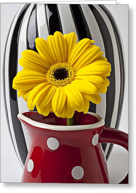 Pitcher Greeting Cards - Yellow mum in pitcher  Greeting Card by Garry Gay