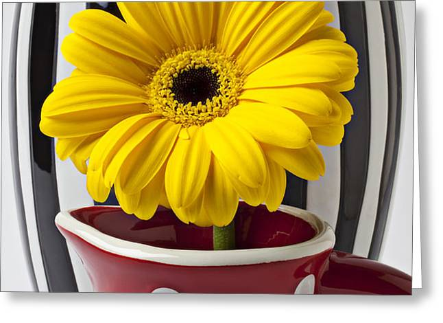 Yellow mum in pitcher  Greeting Card by Garry Gay
