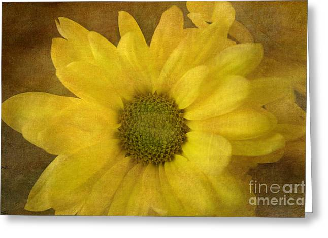 Yellow Mums Greeting Card by Benanne Stiens
