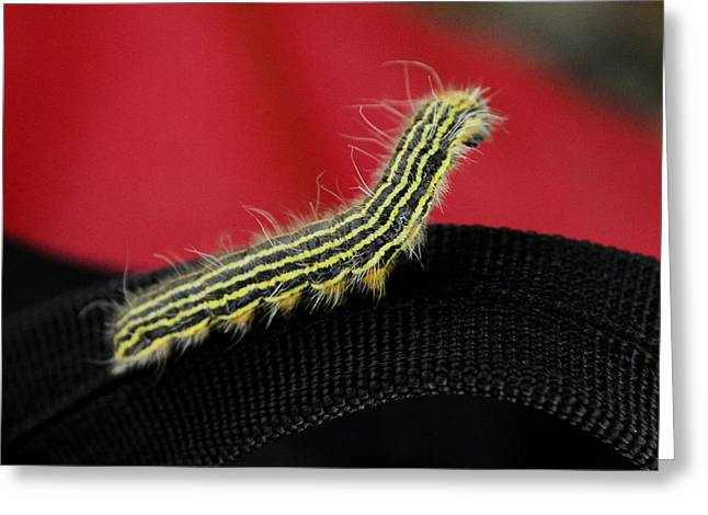 Detail Greeting Cards - Yellow Necked Caterpillar Greeting Card by Lisa  Phillips