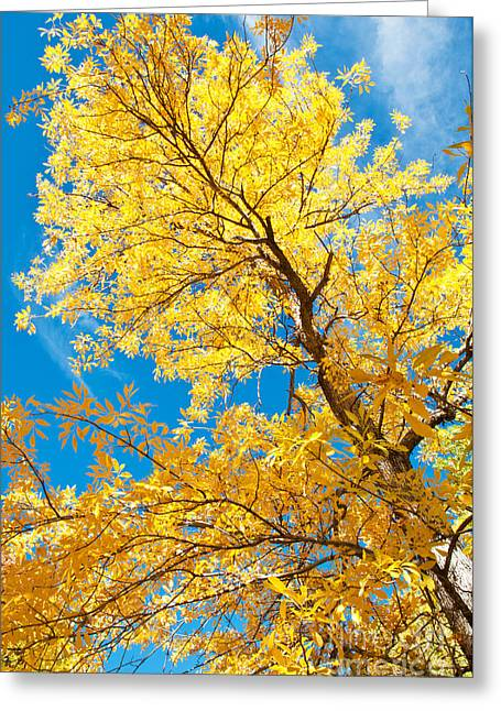 Yellow On Blue Greeting Card by Bob and Nancy Kendrick