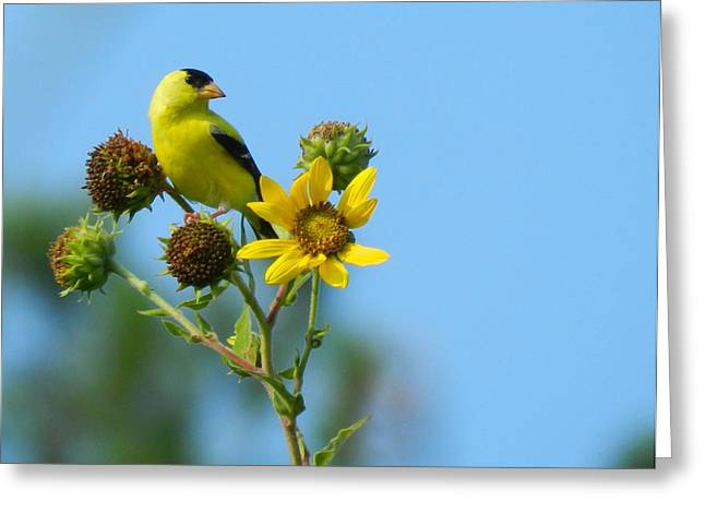 Yellow On Yellow Greeting Card by Don L Williams