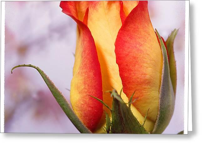 Orange Rose Greeting Cards - Yellow Orange Rose Greeting Card by Mike McGlothlen