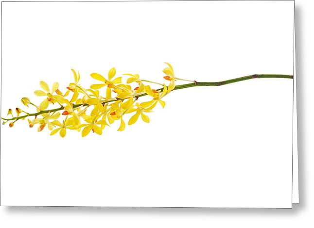 Beauty-treatment Greeting Cards - Yellow Orchid Bunch Greeting Card by Atiketta Sangasaeng