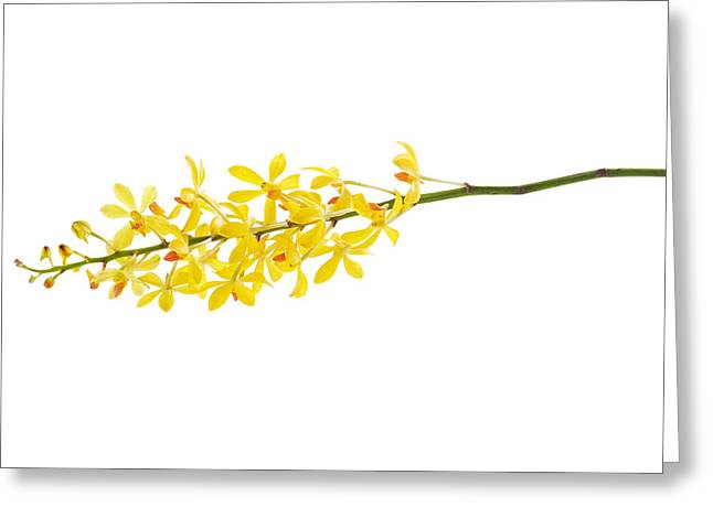Yellow Orchid Bunch Greeting Card by Atiketta Sangasaeng