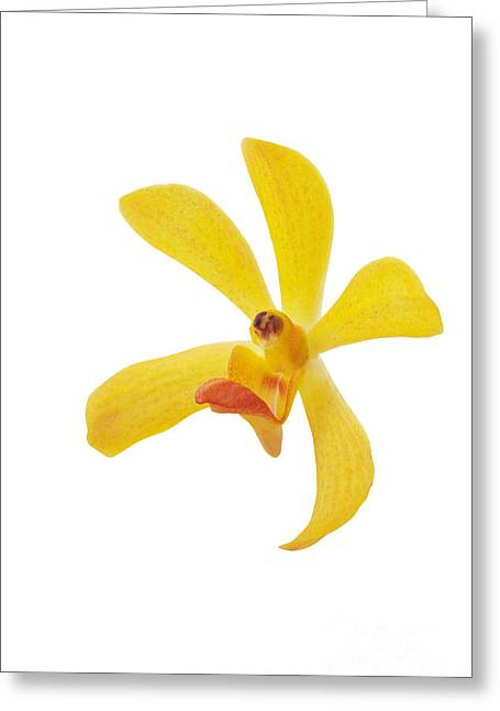Orchid Petals Greeting Cards - Yellow Orchid Head Greeting Card by Atiketta Sangasaeng
