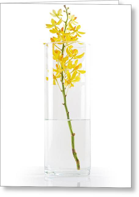 Reflex Greeting Cards - Yellow Orchid In Vase Greeting Card by Atiketta Sangasaeng