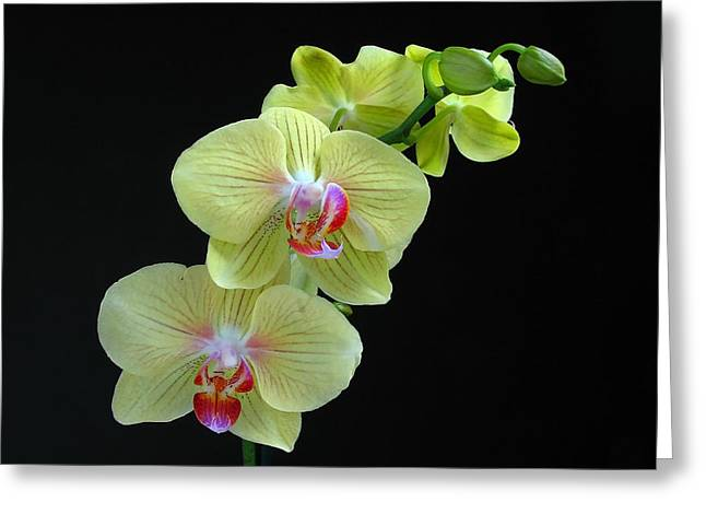 Orchid Canvas Greeting Cards - Yellow Orchidee Greeting Card by Juergen Roth