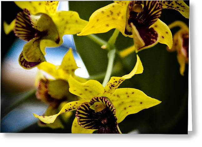 Yellow Orchids Greeting Card by David Patterson