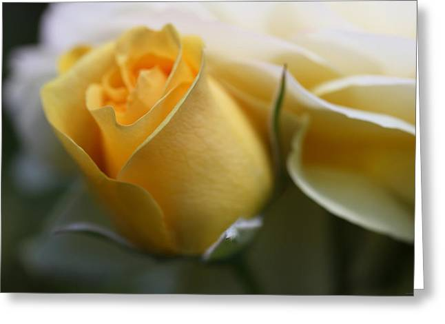 Roses Greeting Cards - Yellow Rose Bud Flower Greeting Card by Jennie Marie Schell