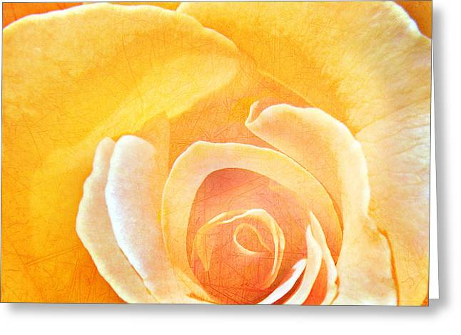 Steven Michael Photography Greeting Cards - Yellow Rose Greeting Card by Steven  Michael
