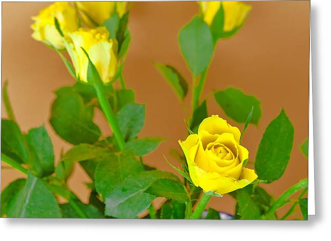 Mother Gift Greeting Cards - Yellow Roses Greeting Card by Tom Gowanlock