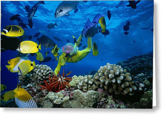 Reef Photos Greeting Cards - Yellow Scuba Diver Greeting Card by Ed Robinson - Printscapes