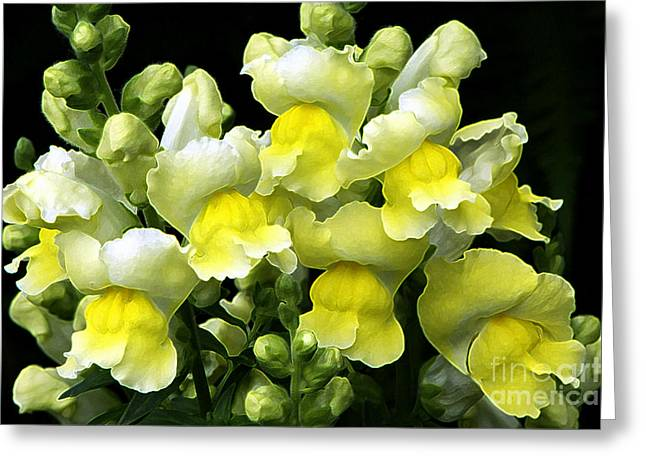 Snapdragons Greeting Cards - Yellow Snapdragons enhanced Greeting Card by Sharon  Talson
