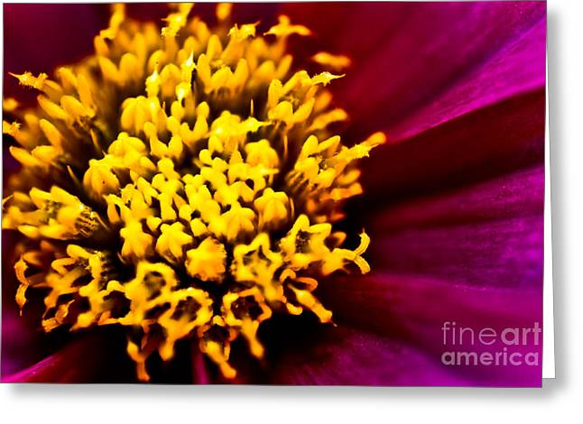 Macro Finalized Photographs Greeting Cards - Yellow Stars Burst Greeting Card by Ryan Kelly