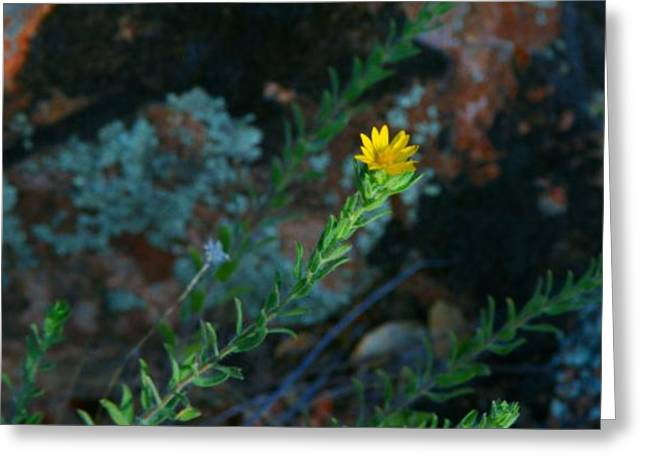 Toward Love Greeting Cards - Yellow Stretching Greeting Card by Chrissy Skeltis