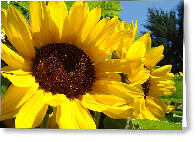 Best Selling Flower Art Greeting Cards - Yellow Sunflowers art prints Summer SunFlower Greeting Card by Baslee Troutman