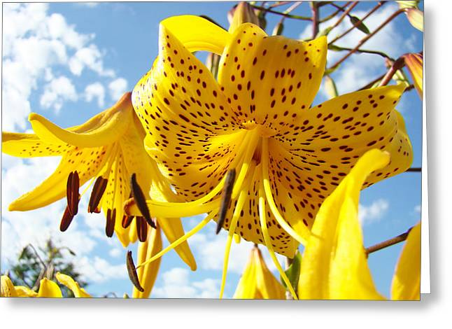 Lilies Framed Prints Greeting Cards - Yellow Tiger Lily Flowers art prints Lilies Greeting Card by Baslee Troutman