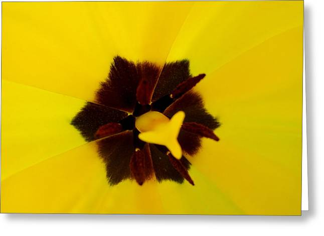 Indiana Flowers Mixed Media Greeting Cards - Yellow Tulip Greeting Card by Bruce McEntyre