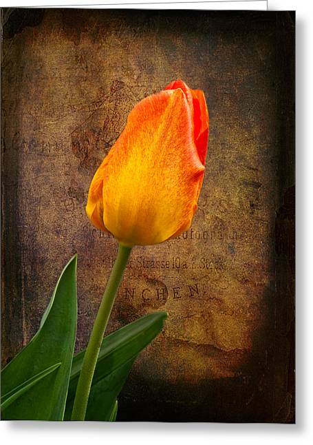 Texture Flower Greeting Cards - Yellow Tulip Greeting Card by Fred LeBlanc
