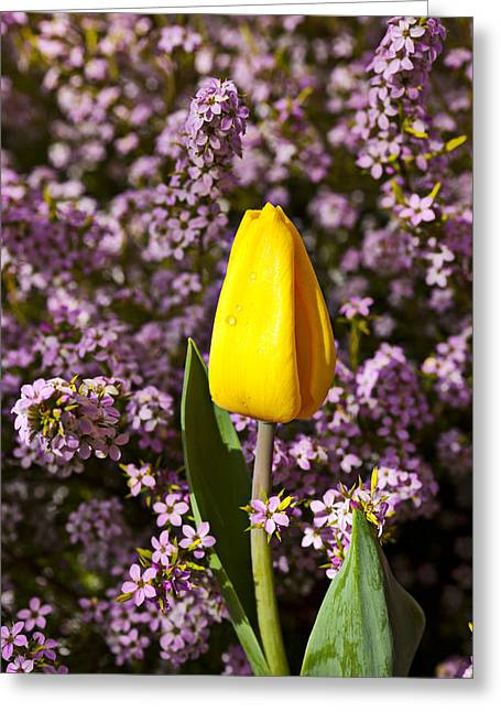 Single Photographs Greeting Cards - Yellow tulip in the garden Greeting Card by Garry Gay