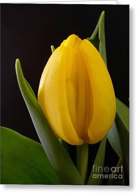 Tulip Bud Greeting Cards - Yellow Tulip Greeting Card by Kaye Menner
