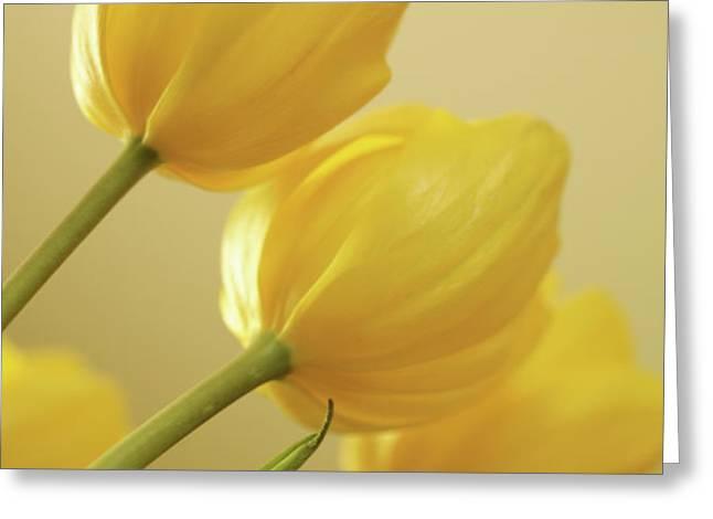 Yellow Tulip Trio Greeting Card by Bonnie Bruno