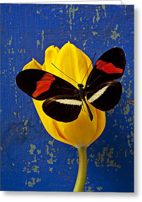 Wooden Greeting Cards - Yellow Tulip With Orange and Black Butterfly Greeting Card by Garry Gay