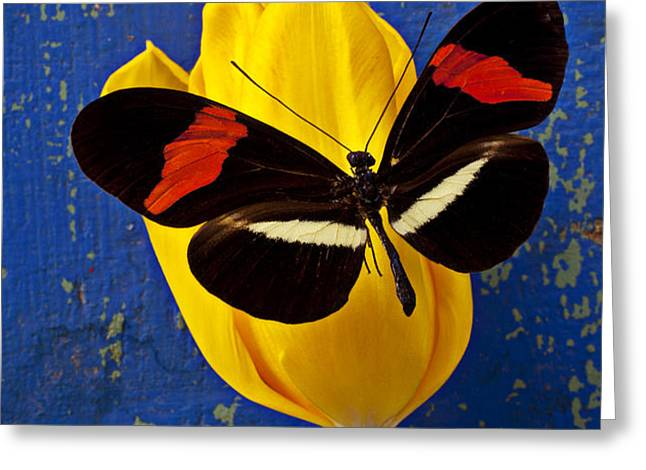 Yellow Tulip With Orange and Black Butterfly Greeting Card by Garry Gay